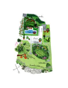 Illustrated garden plan - Anne Smith