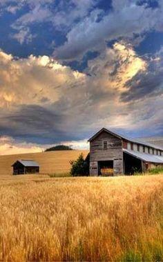 Farm and wheat field.