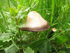 https://flic.kr/p/g7NwFN | Mushroom | Wild mushroom growing in the grass