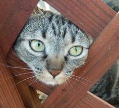 My cat Kitty Cat. Lisa, Marion, Arkansas. 7/24/12.