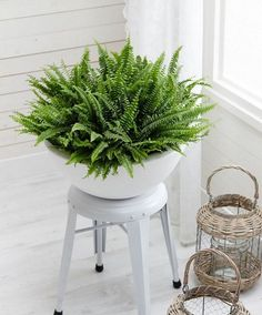 Take a look at these 19 Best low-maintenance houseplants, if you're new to growing plants indoors or find yourself lazy.