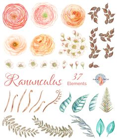Ranunculus Watercolor by AurAandTheCat on @creativemarket