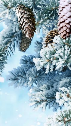 Christmas Mood, White Christmas, Land Scape, Winter Wonderland, Clouds, World, Drawings, Flowers, Nature