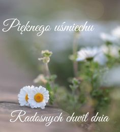 Dandelion, Flowers, Plants, Night, Fotografia, Polish, Projects, Dandelions, Plant