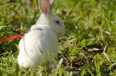 Rabbit Found Screaming After Escape From Meat Farm https://m.facebook.com/find-friends/browser/?r New Home
