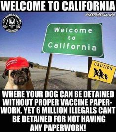 Ugh! So true! Plus--they have to be licensed/regestered, and if they aren't--we get fined!!!!