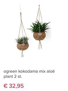 Plant Hanger, Aloe, Plants, Home Decor, Decoration Home, Room Decor, Planters, Plant, Planting