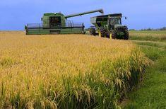 Arkansas Rice Production!