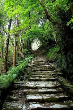 landscape-lunacy: Steps Into the Woods Killarney Ireland - by...