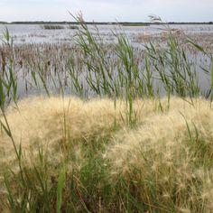 08/31 birdland shore