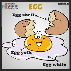 Egg Parts, English, Vocabulary