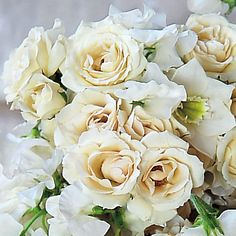 The traditional all-white bouquet gets a makeover w/ a loose arrangement of champagne spray roses, sweet pea, & Eucharist lilies, tied w/ an ivory satin ribbon.