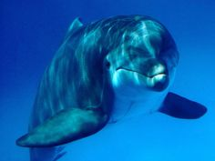 Dolphins are a big part of Deana's story. www.adealwithGodbook.com