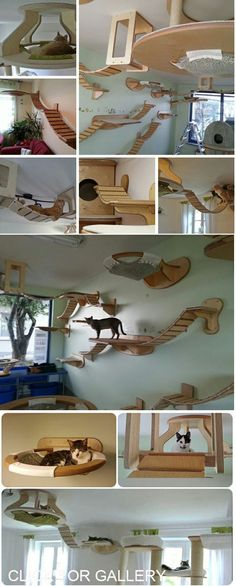 Art On Sun: Amazing cat furniture will have your cat climbing the walls and ceiling