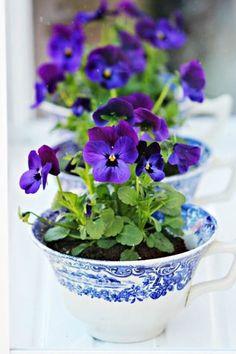 9 Cute Teacup Gardens - DIY Miniature Garden Projects Pretty pansies in tea cups
