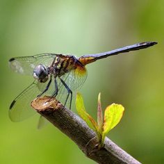 #oaklandnaturepreserve #orlando #florida #nature #outdoors #wildlife #instagood #photooftheday #wildlifephotography #photography #followme #picoftheday #summer #instadaily #nofilter #insect #dragonfly