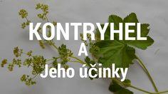 Kontryhel a jeho účinky Herbs, Plants, Youtube, Herb, Plant, Youtubers, Youtube Movies, Planets, Medicinal Plants