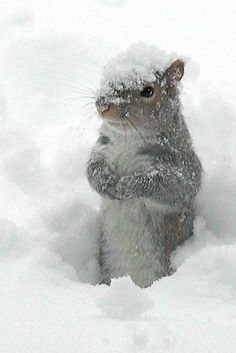 Snow - squirrel