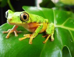 .frog
