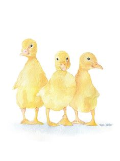 Three Ducklings is a fine art canvas print from my original watercolor painting. Portrait/vertical orientation. 12x16 The quality canvas is printed