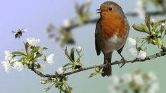 Has escuchado el canto de ese pájaro? Cuida y Fortalece tu Espiritualidad