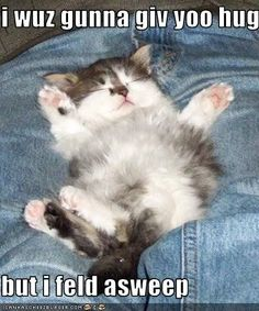 Browse all of the Funny Animals With Captions photos GIFs and videos. Find just what you're looking for on Photobucket