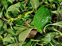 Small Gardens, Botany, Natural Remedies, Spinach, Herbalism, Plant Leaves, Greek, Health Fitness, Herbs