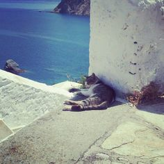 Cat in Skopelos. Cats are everywhere in the islands!