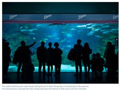 Ok - so this isn't an aquarium, but an ad for Ziploc.  Loved the concept though!