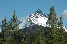 Mt. Hood Oregon.  #birding #abirdsdelight #oregon