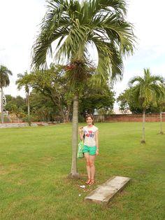 Me, holding a penang, standing next to a penang tree, on Penang Island - Malaysia