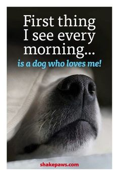 Love to see my dogs that love me! All Dogs, I Love Dogs, Puppy Love, Best Dogs, Cute Dogs, Dogs And Puppies, Doggies, Lovers Quotes, Dog Rules