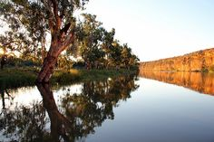 Reflections - River Murray, Walker Flat, South Australia South Australia, Western Australia, Australia Travel, Murray River, Down The River, Scenery Photography, Us Travel, Division, Fresh Water