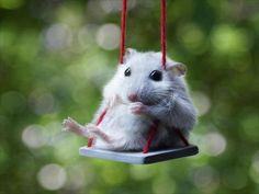 Just a swingin' :P