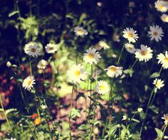 Tiny little flowers <3