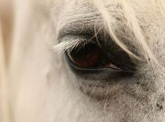 Look into a horses eye and you look into their soul - this eye belongs to one of my horses  http://aromanatural.co.uk  #horses #horseseyes