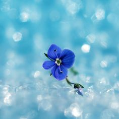 blue ballerina by jostef.deviantart.com on @DeviantArt