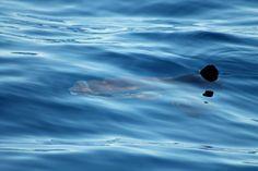 #leganavale #Ventotene #whalewatching
