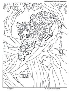 Jungle Safari Coloring Pages Images Of Animal Coloring Pages - Free-safari-coloring-pages