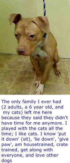 Manhattan Center JOYA - A1031539 *** EXPERIENCED HOME *** FEMALE, TAN, PIT BULL MIX, 2 yrs OWNER SUR - EVALUATE, NO HOLD Reason NO TIME Intake condition EXAM REQ Intake Date 03/28/2015 https://www.facebook.com/photo.php?fbid=986626208016925