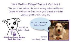 """Relayers! Have you seen this contest that one of our region's events is hosting? It's a Pet Mascot contest. People submit their pet to be the mascot of the community Bark For Life. The pet """"wins"""" through online donations. They raised $17,000 last year. The pet mascot leads the local Bark For Life event and the pet's picture is featured all over the website.    Steal this idea. Share this idea."""
