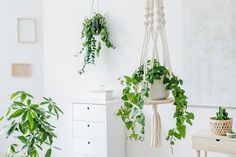 Pest Control: How to Get Rid of Common Houseplant Bugs Natural Home Decor, Unique Home Decor, Cheap Dorm Decor, Home Remodel Costs, Decoration Plante, Target Home Decor, Home Decor Paintings, Eclectic Decor, Home Decor Accessories