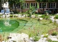 If you want to build a natural pool in your backyard, you can choose from a lot of natural pool designs. In this article, we are going to take a look at 10 natural pool designs. Without further ado, let's check out 10 amazing pool designs. Natural Swimming Ponds, Garden Swimming Pool, Natural Pond, Swimming Pools, Lap Pools, Pool Backyard, Indoor Pools, Indoor Swimming, Pool Decks