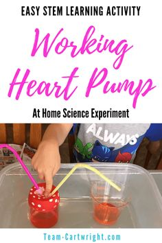 Easy Heart Pump Model: Cardiovascular STEM for Kids – Team Cartwright Make a working heart pump model at home! This is surprisingly easy to put together and it really helps kids understand how the heart works. A great science activity to work on anatomy. At Home Science Experiments, Science Activities For Kids, Stem Science, Science Fair Projects, Preschool Science, Teaching Science, Science For Kids, Learning Activities, Teaching Kids