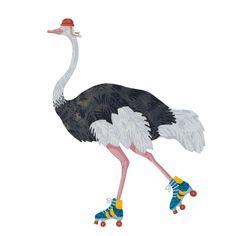 Roller Ostrich | Ted Parker
