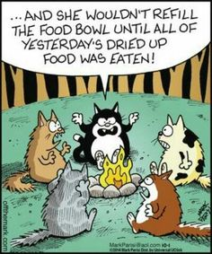 Scary camp-fire stories for kitties. Such a true story! I think this would be as if one of our cats were telling the story. Crazy Cat Lady, Crazy Cats, Funny Animals, Cute Animals, Cat Jokes, Cats Humor, Cat Comics, Funny Cartoons, Cartoon Jokes