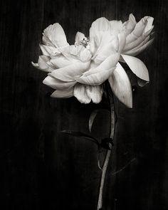 Naturens egna små konstverk. Kom just över fotografen Keri Herers fina blomstersbilder som hon säljer på Etsy, ett litet tips om man vill förgylla väggarna hemma i vår:
