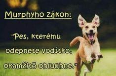 Jokes, Humor, Motivation, Funny, Carpe Diem, Animal Pictures, Husky Jokes, Humour, Memes