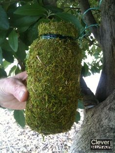Natural Camoflague Geocache