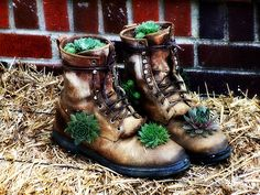 Hens and chicks, my grandmothers and mom used to do this. Need to hit a consignment shop for old boots! Old Boots, Slippers, Hens And Chicks, Forest Fairy, Consignment Shops, Hiking Boots, Garden Design, Combat Boots, Planters